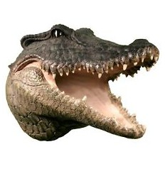 CROCODILE HEAD