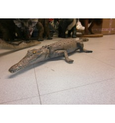 ANIMAL CROCODILE RESTING 4 FT.